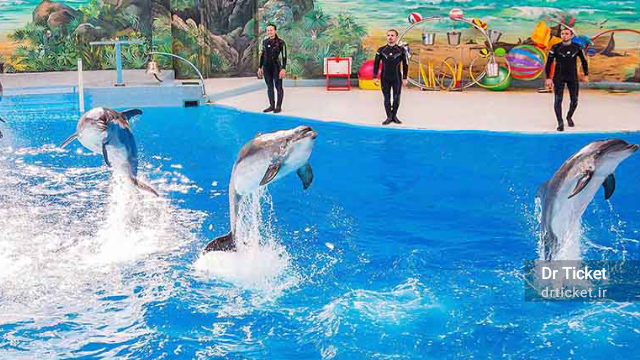 dolphinarium kish island