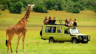 بهترین پارک های ملی اوگاندا