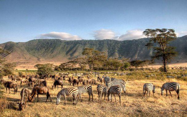 تور تانزانیا