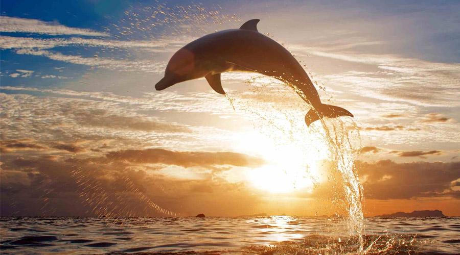 1 | پارک دلفین های کیش : دلفیناریوم و باغ پرندگان و خزندگان | پارک دلفین های کیش به همراه عکس ، نقشه و آدرس | تورگردان