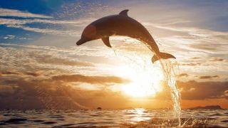 پارک دلفین های کیش به همراه عکس ، نقشه و آدرس | تورگردان