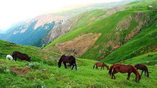 ییلاق سوباتان در استان گیلان میان جنگل های تالش و ییلاقات اردبیل | تورگردان