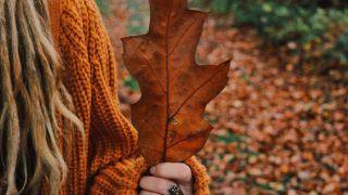ترکیب سحرانگیز رنگ ها در طبیعت پاییزی گیلان