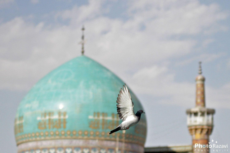 گنبد مسجد گوهرشاد و گلدسته طلایی حرم