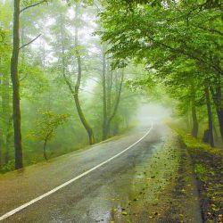 جاهای دیدنی نور از خانه نیما تا جنگل و روستا