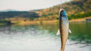 ماهیگیری در مشهد و معرفی مکان های ماهیگیری تفریحی