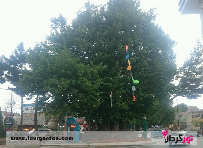 درخت چنار شاندیز