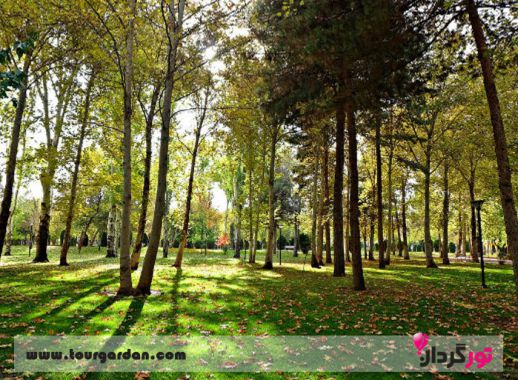 پارک جنگگلی وکیل آباد
