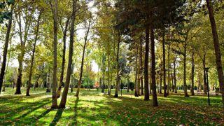 پارک جنگلی  وکیلآباد؛ با قدمتی 65 ساله