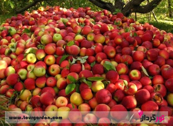 میوه های باغ های بوژان