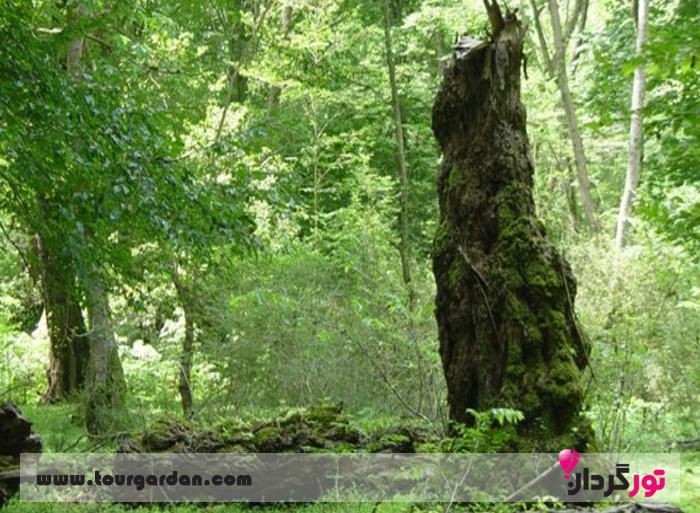 پارک جنگلی توسکا