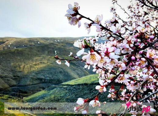 روستای ازغد در بهار