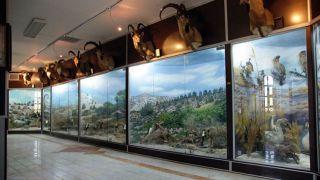 موزه ژئوپارک قشم (نمونه های جانوری، مردم شناسی)