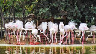 باغ پرندگان اصفهان کجاست؟ معرفی قسمت های مختلف