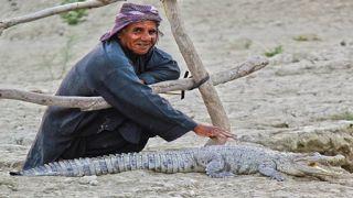 باهو کلات چابهار میزبان گاندو؛ تمساح پوزه کوتاه ایرانی