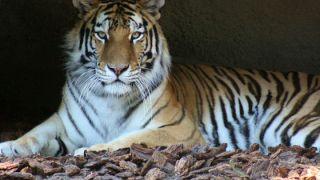 باغ وحش وکیل آباد (پیش از بازدید بخوانید)